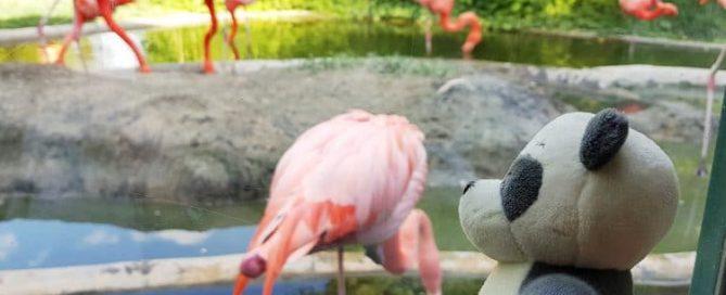 Flamingos at Zoo Vienna, Austria