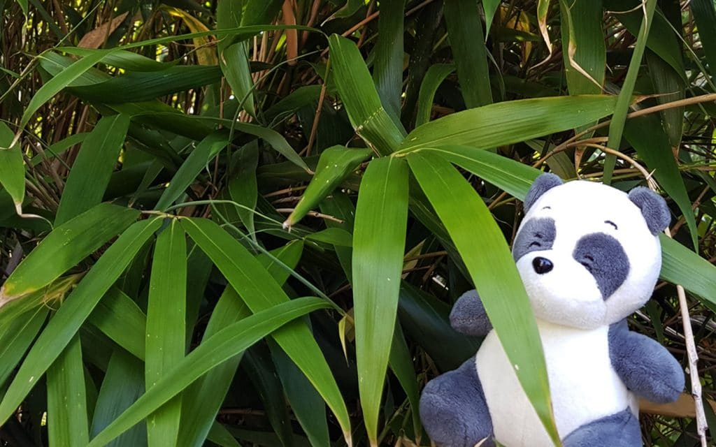 I found some bamboo at the zoo. Is it allowed to taste it? Maybe a little bit?