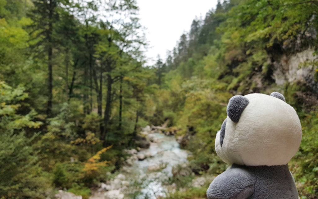 Mister Wong hikes the Tscheppaschlucht Canyon in Carinthia, Kärnten, Austria