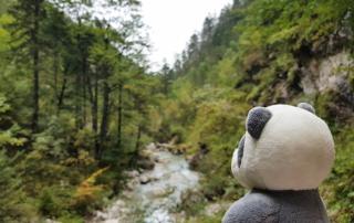Mister Wong hiking the Tscheppaschlucht Canyon in Carinthia, Kärnten, Austria