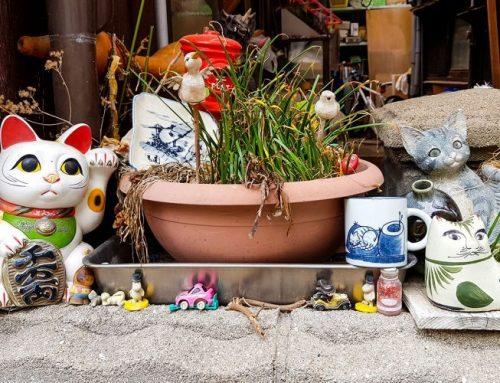 Onomichi – Japan's secret Cat Hotspot?
