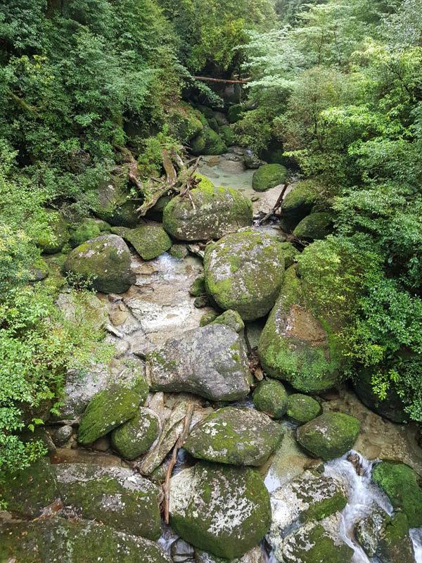 Old Japanese cedar trees, Yakusugi, in Yakushima Island National Park, Kyushu, Kagoshima, Japan